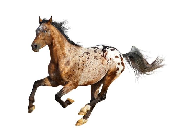 Gentest Pferd 1
